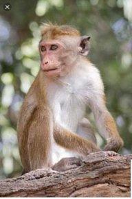 Monkeyman68